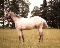Amazing Grace as a 2 yr. old Full sister to E.C. Pizazz